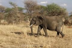 elephant--serengeti-park-ta