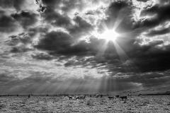 P 5 SUNLIGHT RAYS by Bob Harper