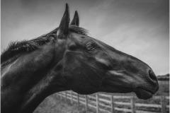 P-HORSES-HEAD-by-Bob-Harper