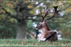 YOUNG STAG by Brian Crossland