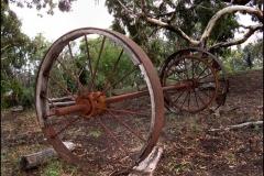 Wagon-Wheels