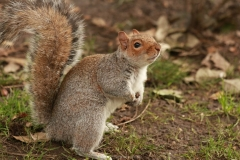 GIVE ME A NUT by Geoff Chapman
