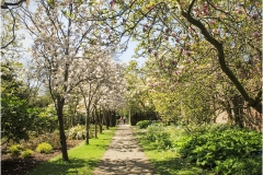 D TREE BLOSSOM WALK By Bob Harper