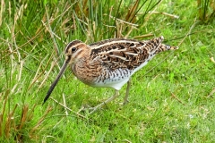 SNIPE by Phil Holmes 1