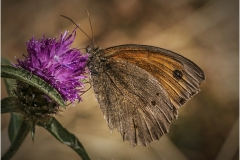 P-SKIPPER BUTTERFLY by Bob Harper