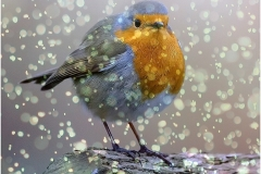 D CHRISTMAS ROBIN by Jeff Moore