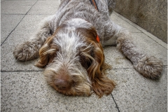 3-P-DOGTIRED-by-Bob-Harper-Runner-Up-Printed-Image